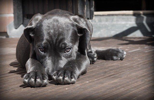 ¿Por qué contratar un seguro para perros?